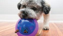Kong Ödüllü Köpek Oyuncağı, Hopz 10cm - Thumbnail
