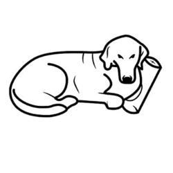 Pet Comfort Alpha Mirandus 33 Kedi ve Köpek Yatağı 50x60cm - Thumbnail