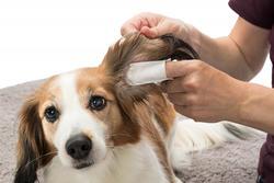 Trixie Kedi Köpek Kulak Temizleme Mendili - Thumbnail