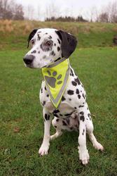 Trixie - Trixie Köpek Bandanası S-M 29-42 cm