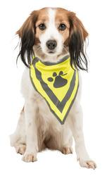 Trixie - Trixie Köpek Bandanası Xs-S 22-28 cm