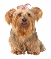 Trixie - Trixie Köpek Saç Tokası 4 - 5,5cm ( 10 Adet )