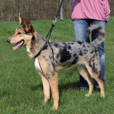 Trixie Köpek Yürüme Eğitim Tasması L45-65cm 25mm