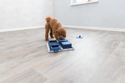 Trixie - Trixie Köpek Zeka Eğitim Oyuncağı,Poker 31X10X31cm