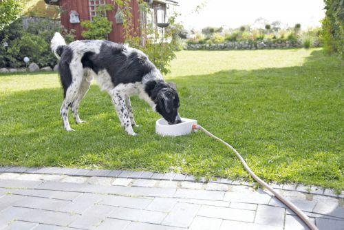 Trixie Köpek/Kedi Suluğu, 1,5lt/ 24 x 10 x 23cm
